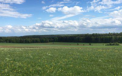 Solarpark Küpfendorf – Bürgerentscheid gewonnen